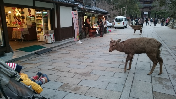Saking banyaknya rusa yang mendekati Eiji, lama-lama dia ketakutan. :D