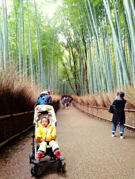 Yey! hutan bambu.