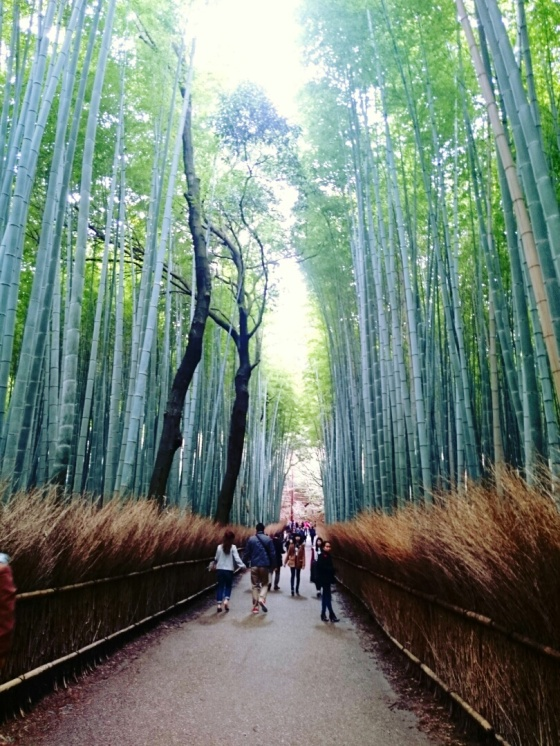 Sagano bamboo groves.