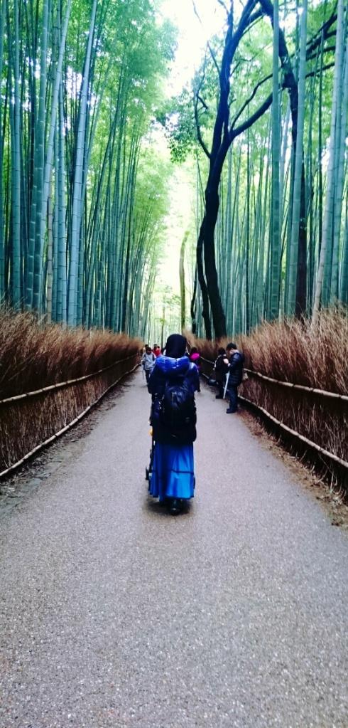 Sagano Bamboo Forest, Arashiyama 2015.