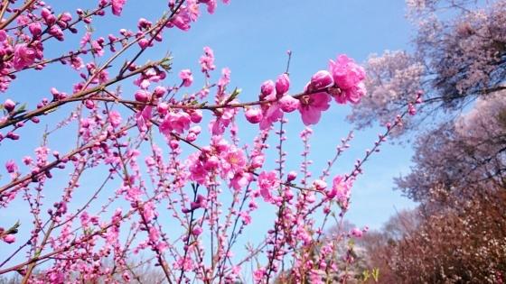 Salam penuh cinta dari alam. :)
