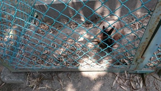 Ada berbagai hewan peliharaan, seperti kelinci dan kura-kura.